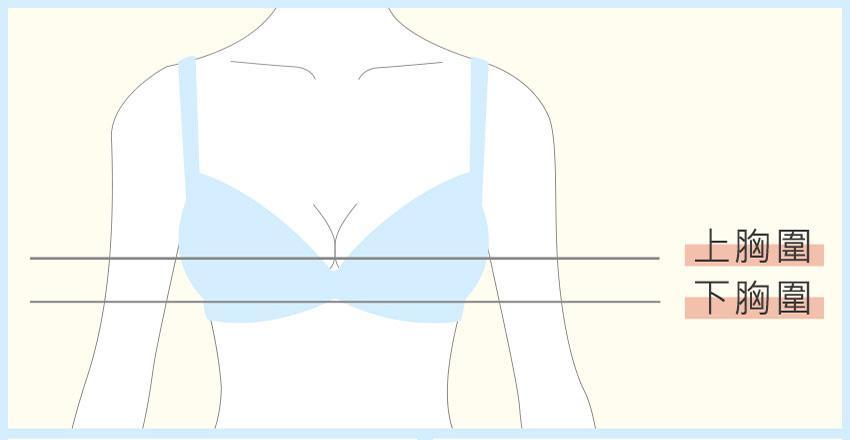 知道什麼是「上胸圍」、「下胸圍」、「罩杯」